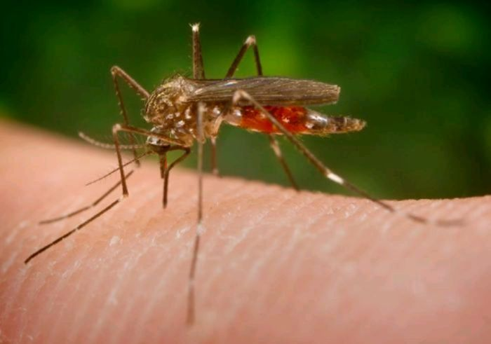 virus-zika-2.jpg