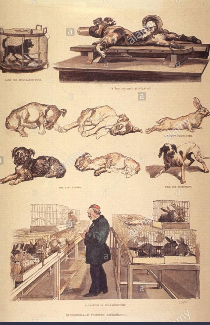 louis-pasteur-1822-1895-in-laboratory-working-on-hydrophobia-rabies-CWBTWN.jpg