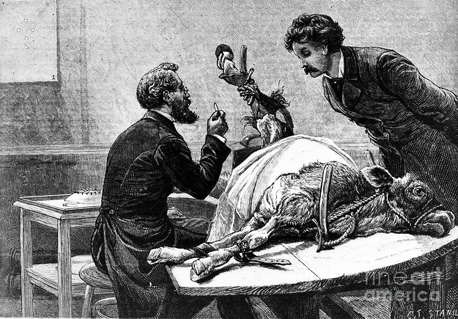 smallpox-vaccine-1883-granger.jpg